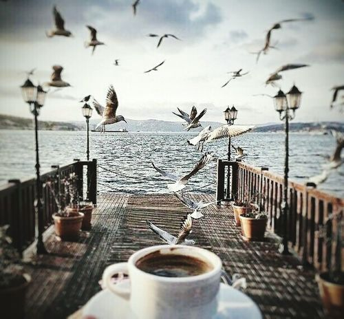 No coffee no morning Awsome Sky SonyZ5 Birds Nature Clean Water Coffee Time Coffeetime Coffeelovers See Sunset #sun #clouds #skylovers #sky #nature #beautifulinnature #naturalbeauty #photography #landscape