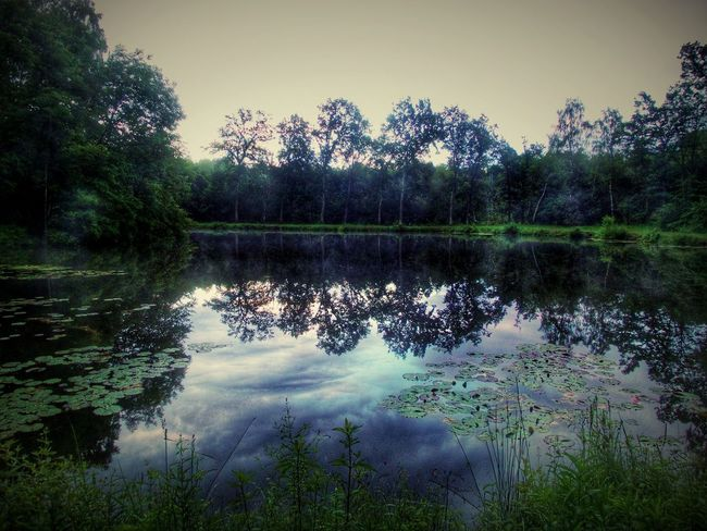 After Sunset Forest Lake Lily Leaves Tree Silhouettes Dark Photography Cloudreflections In The Water Calm After The Storm Still Ruht Der See Moments Of Silence My Hidden Fishing Lake Original Experiences Birkenweiher Langenselbold Germany🇩🇪 Showcase June Hidden Gems