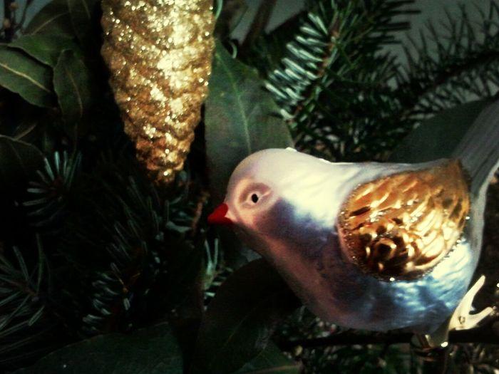 Christmas Xmas Xmas Time
