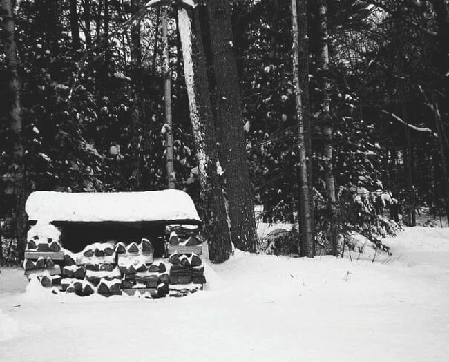 My Winter Favorites Maine Snow Forest Wood New England