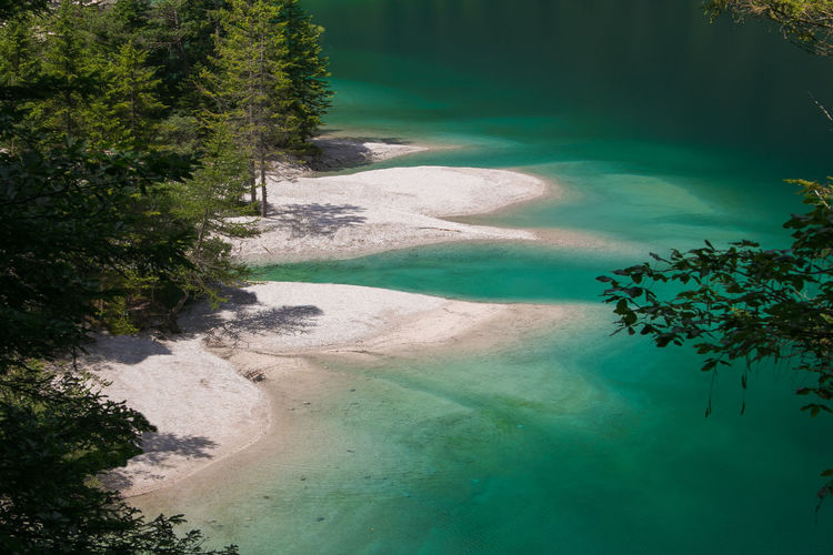 Wonderful beach of Tovel lake in Trentino Alto-Adige Alpine Coastline Dolomites Dolomites, Italy Dolomiti Italy Lago Di Tovel Tovel Lake Wood Alps Beach Beauty In Nature Coast Crystalline Dolomiti Forest Green Color Idyllic Landscape Mountain Nature No People Scenics - Nature Tovel Tranquil Scene Water