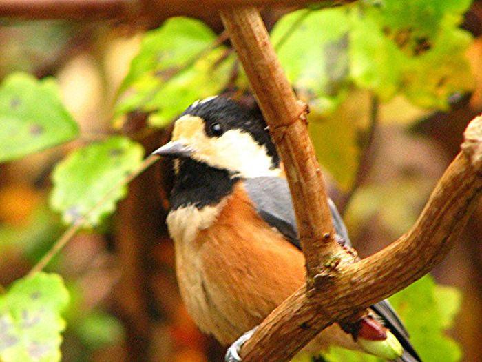 ヤマゲラ Nature Japan Birds EyeEm Nature Lover