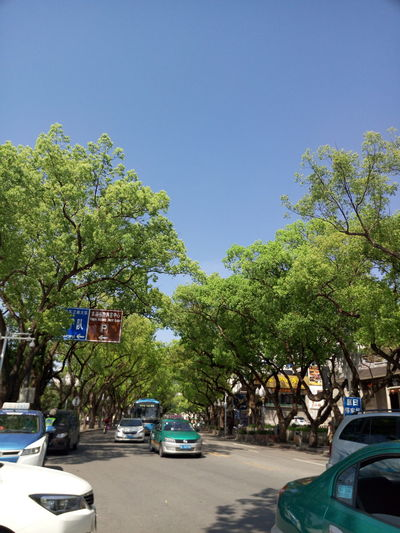 Nature Trees Bule Sky Leafs 🍃 City Built Outdoors Street People The West Lake Sunshine Saturday