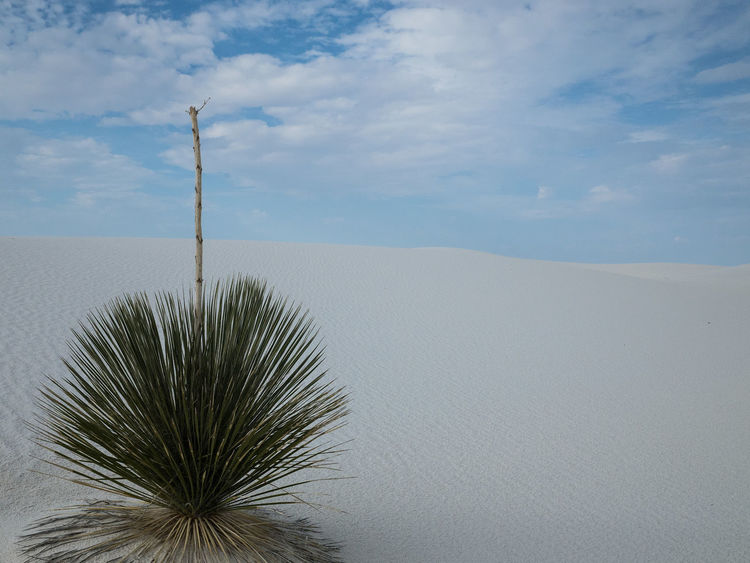 White Sands National Park Arid Climate Beauty In Nature Cloud - Sky Day Desert Landscape Nature No People Outdoors Sand Dune Scenics Sky Tranquil Scene Tranquility Yucca Plant