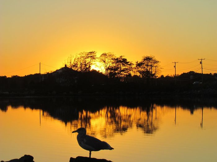 Sunset Reflection Water Lake Nature Animals In The Wild Silhouette Bird Scenics Tranquility Beauty In Nature Animal Wildlife Large Group Of Animals No People Animal Themes Tree Outdoors Sky Vacations Sun