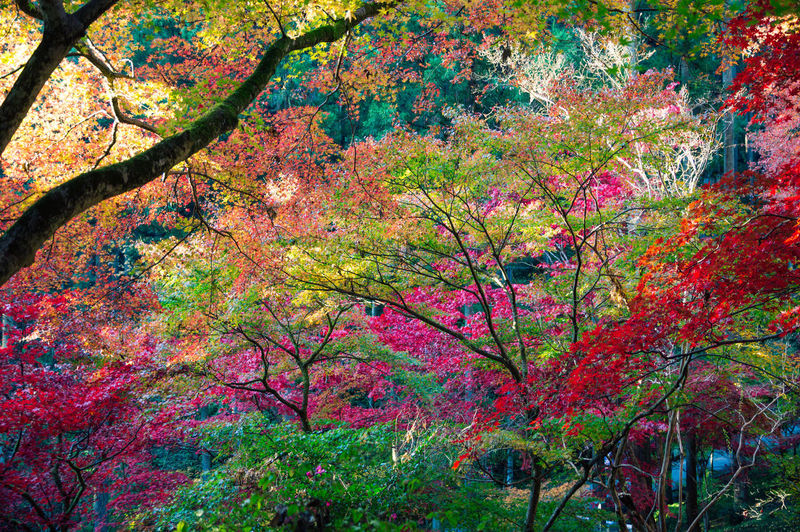 Pink flowering plants and trees during autumn