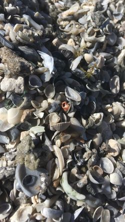 Beach Shells High Angle View No People Nature Outdoors Backgrounds Large Group Of Objects Sunlight