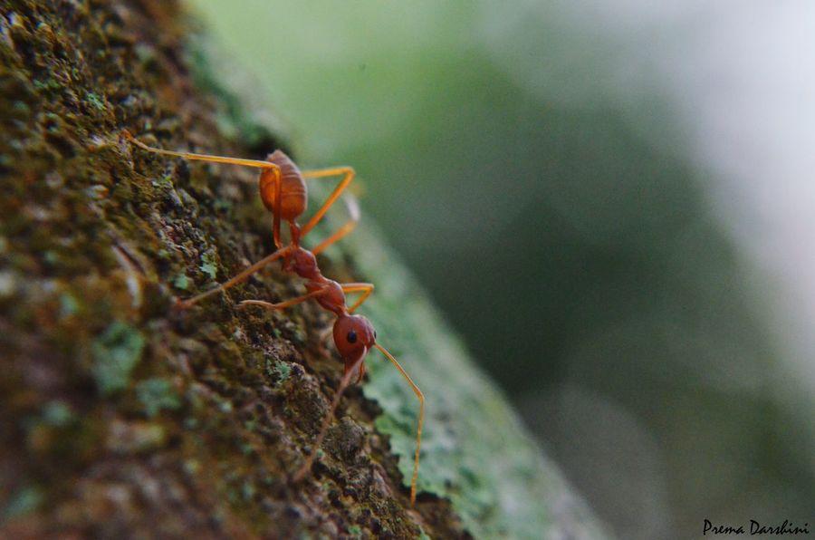 My dream shot.. 😍 Macro Photography Macro_collection Ant Photography Fav Shot Tree Photography