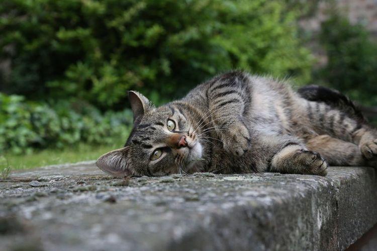 Tabby cat lying on gray concrete ledge