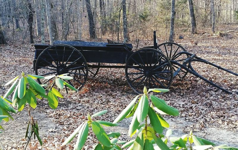 Antique Horse Drawn Wagon Fall Black Outdoors Missouri Ozarks United States Day Outdoors No People Leaf Sunlight Nature