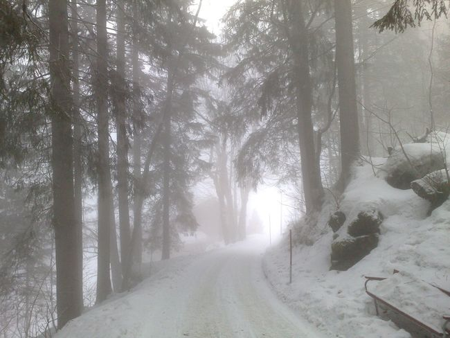 Beauty In Nature Country Road Countryside Day Diminishing Perspective Empty Road Growth Long Narrow Nature Non-urban Scene Outdoors Remote Road Scenics Snow Covered Solitude The Way Forward Tranquil Scene Tranquility Transportation Tree Tree Trunk Treelined Vanishing Point