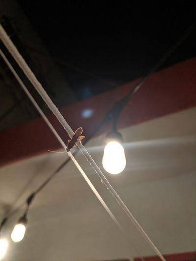 Insect Stranger