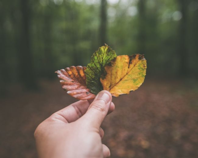 Close-up of hand holding leaves in forest
