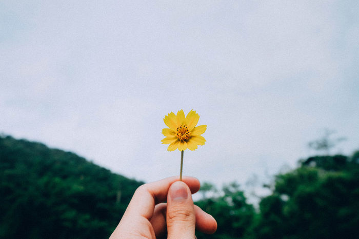 Flower Human Hand Human Body Part Personal Perspective Fragility One Person Holding Nature Flower Head Petal Plant Close-up Uncultivated Outdoors Beauty In Nature Freshness Cloud - Sky Sunflower Sky People EyeEm Gallery EyeEmNewHere EyeEm Nature Lover EyeEm Best Shots - Nature Eye Em Nature Lover