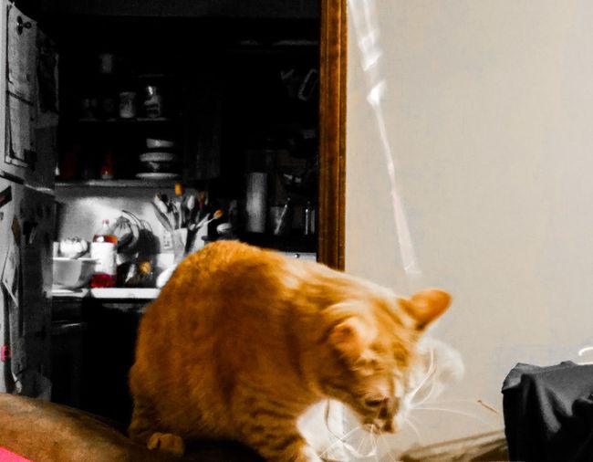 Victory iz mine! Die Valentine's bahlune! Pets One Animal Domestic Animals Animal Themes Domestic Cat Mammal No People Catsofeyeem