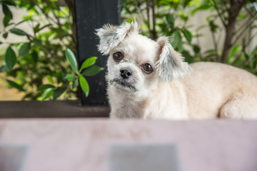 Animal Themes Close-up Day Dog Domestic Animals Mammal No People One Animal Outdoors Pets Portrait Shih Tzu