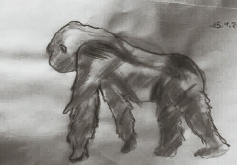 Gorilla ♡ Check This Out Drawing Art Taking Photos charcoal