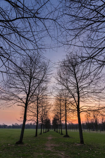 Sunset at the park Colors Bare Tree Beauty In Nature Branch Environment Field Grass Idyllic Land Landscape Nature No People Non-urban Scene Outdoor Photography Outdoors Outdoors Photograpghy  Plant Scenics - Nature Sky Sunset Tranquil Scene Tranquility Tree Treelined