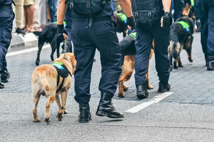 Low section rear view of police men walking with dogs on footpath