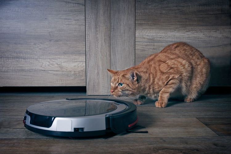 Funny ginger cat lurking behind a robot vacuum cleaner.