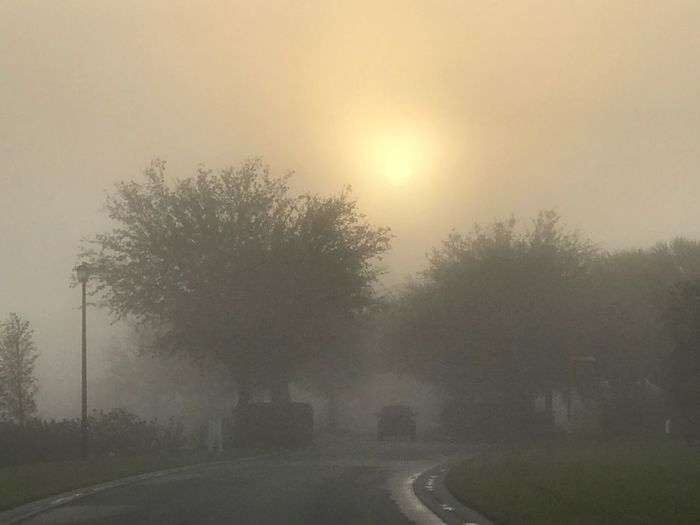 Is not the size of your light or how shinny it is that's important, is remembering that darkness will never overcome light regardless of the circumstances... IPhoneography Iphonephotography No Filter Tree Fog The Way Forward Nature No People Road Tranquility