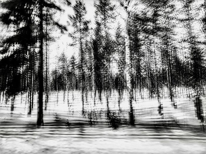 Vastness, trees