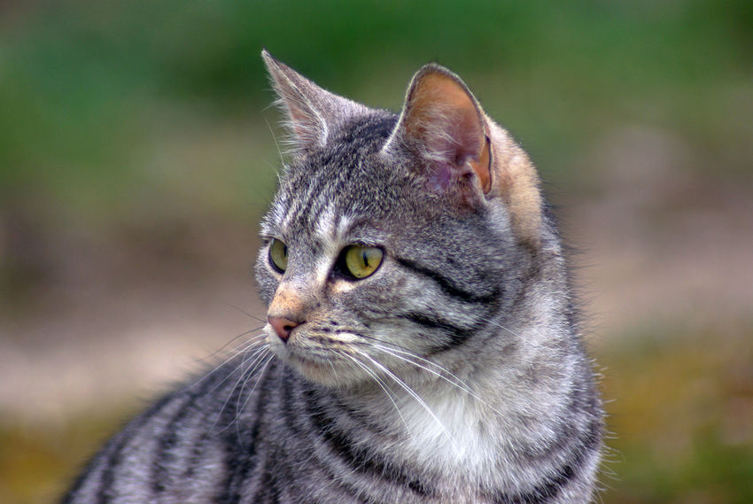 Alertness Animal Animal Head  Animal Photography Animal Themes Animal_collection Cat Cats Close-up Cute Cats Day Domestic Animals Domestic Cat Feline Focus On Foreground Kitty Looking Away Mammal No People One Animal Pet Pets Portrait Whisker Pet Portraits