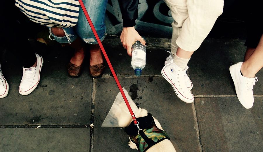 i see feet Brick Lane Dog Life East London Feet On The Ground Pug Pug Life  Shorditch Thirsty