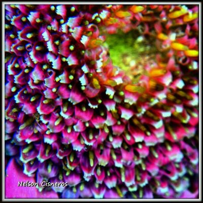 Feliz día a todos - happy day to all Macrophotography Macrogardener Macrolove Macro_family macro_perfection gf_Ve gf_daily instalike igersvenezuela igersmiranda_flores instagramhub iphoneonly flowerporn floralstyles_gf flor flower