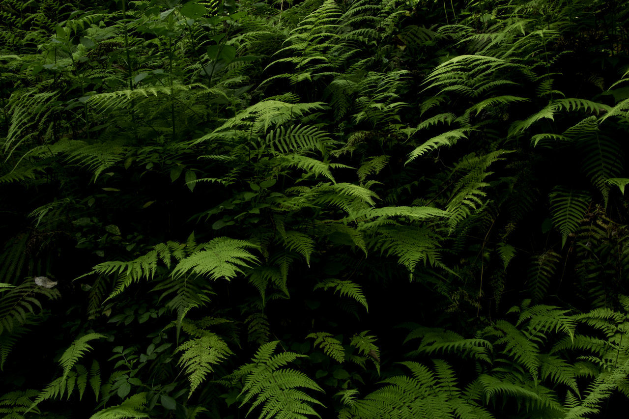 green, growth, nature, fern, green color, leaf, plant, forest, beauty in nature, tree, no people, outdoors, day, freshness
