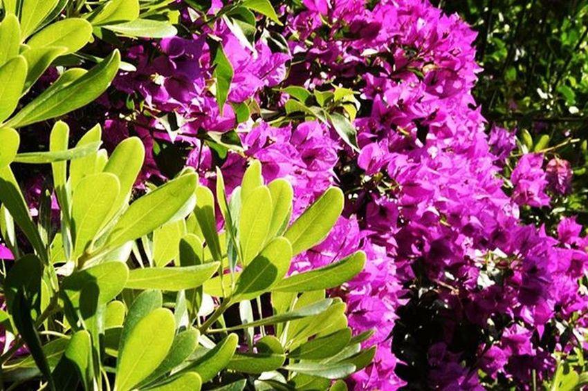 Purple Green Smile Plants Outsiders  Takingphotos Instagood Clickfor500gains Clickfor5kfollows Hitfor100fans Hitfor100follows