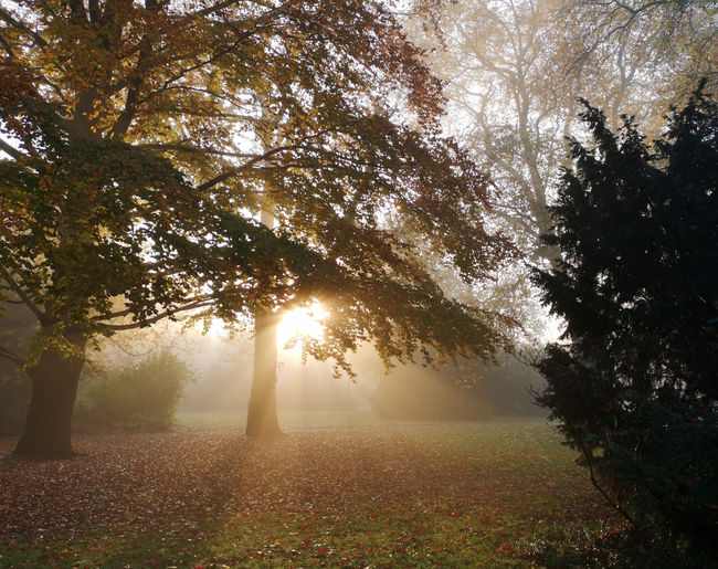 Sunlight streaming through trees on field during foggy weather