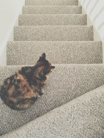 Cat on stairs Cat Stairs Top Down Black And Ginger And White Cat House Household Objects Householdphotography