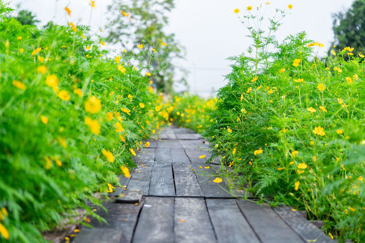 Footpath amidst plants and yellow flowers growing in park