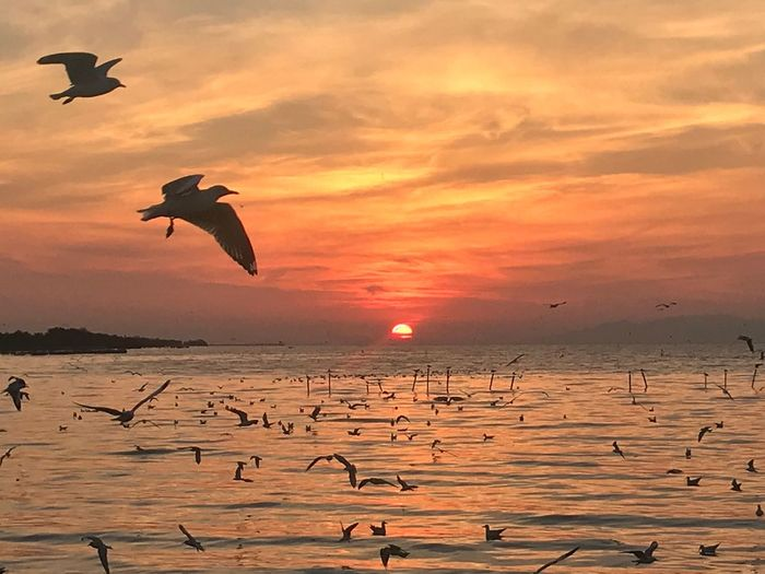 Sunset Sea Nature Beauty In Nature Water Sky Orange Color Bird Flying Sun Animal Themes No People Horizon Over Water Beach Silhouette