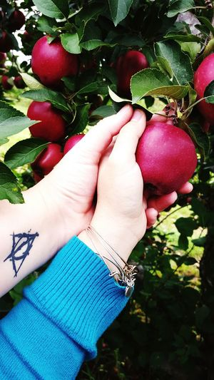 What I Value My Love Love Lesbian Apple Picking Fun Lovely in Londonderry New Hampshire