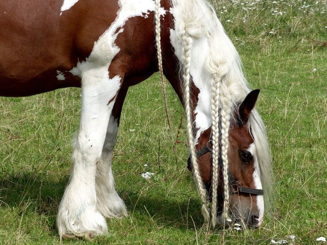 Domestic Animals Animal Themes Livestock Grass Horse Mammal Field Grazing Cow No People Day One Animal Outdoors Standing Nature Close-up Pretty Pretty Horse
