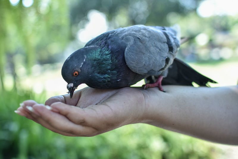 free bird cnx55 Animal Wildlife Animals In The Wild Bird Close-up Day Finger Focus On Foreground Hand Holding Human Body Part Human Hand Human Limb Lifestyles One Animal One Person Outdoors Perching Real People Unrecognizable Person Vertebrate