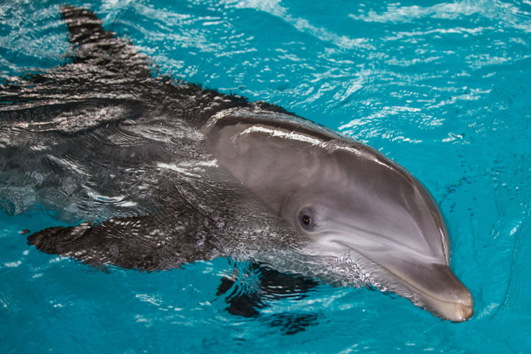 Animal Themes Animal Wildlife Animals In The Wild Aquarium Aquatic Mammal Close-up Day Dolphin Mammal Nature No People One Animal Outdoors Sea Sea Life Swimming Water