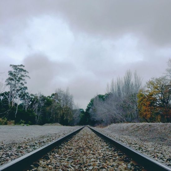 Project 365 Winter Train Tracks Trees IPhoneography taken with iPhone 6 using Camera+, IPad Edit using Filterstorm Neue, Afterlight and Camera+