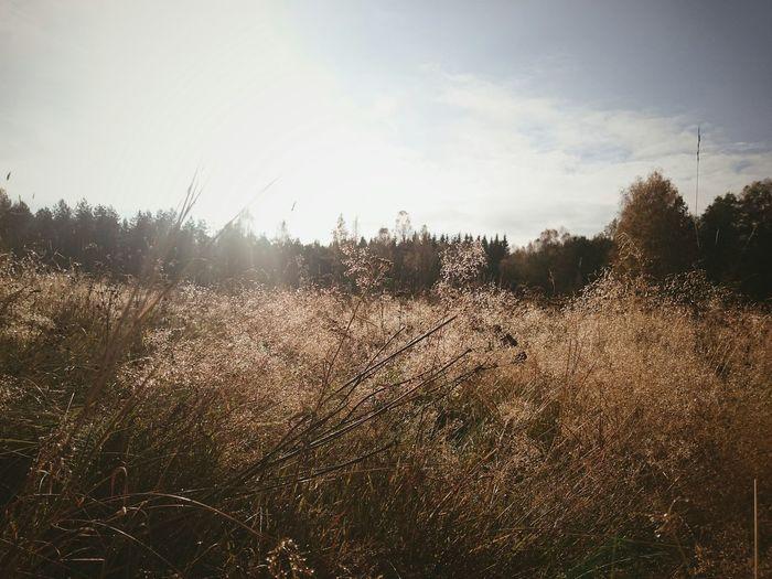 I absolutely adore the Autumn Colors Sherwoodskogen Sherwood Forest
