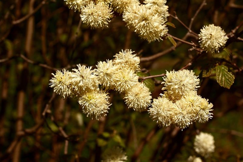Flowering Tree Plant Growth Focus On Foreground Beauty In Nature Close-up No People Day