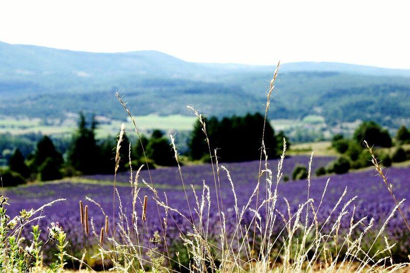 France Lavanda Provence Nature