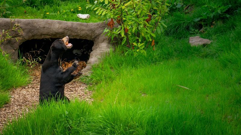 Bear Animal Mammal Animal Themes Plant Green Color Animal Wildlife Grass