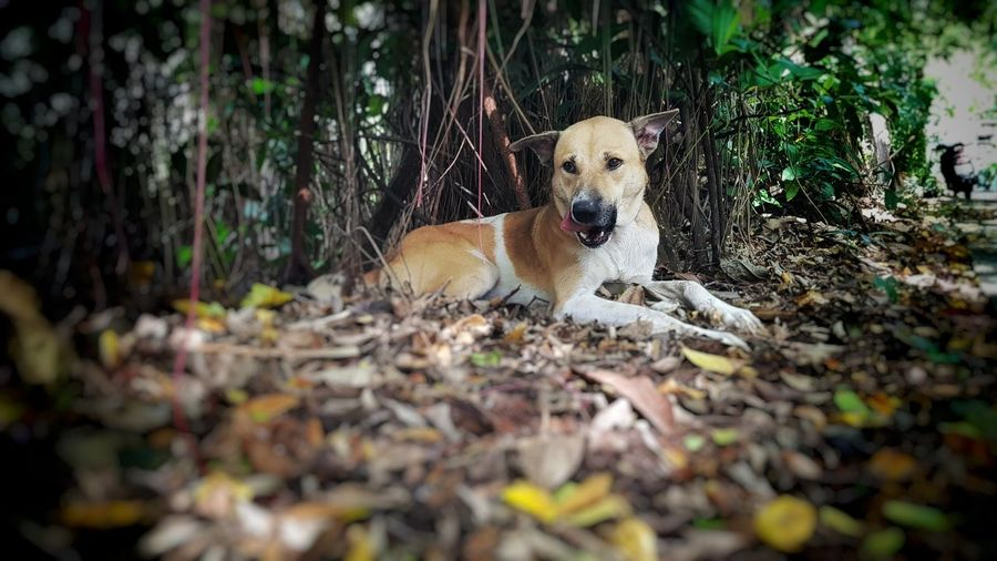 Dog Dog One Animal Animal Themes Selective Focus Pets Mammal Looking At Camera Domestic Animals Day Portrait Outdoors No People Nature