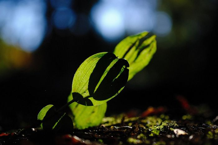 Shadow And Light Close-up Focus On Foreground Fragility Leaf Outdoors Plant Part Selective Focus Sunlight And Shadow