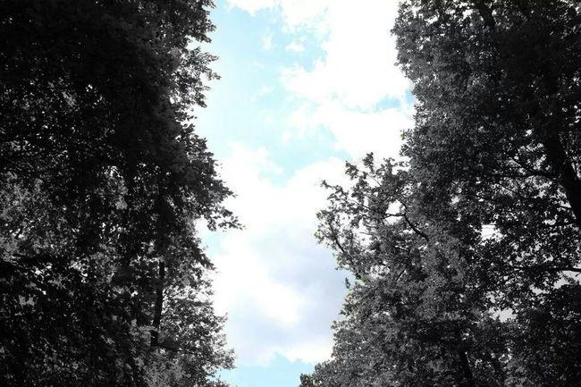No Titel Black And White Photography Nature Dreieich