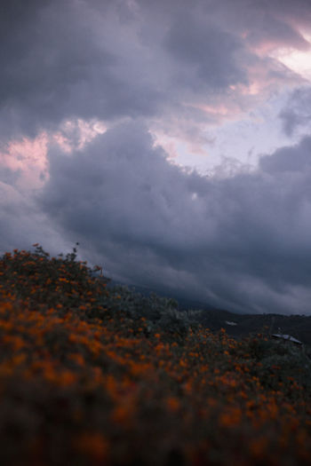 Cloud - Sky Sky Beauty In Nature Nature Tranquility Scenics - Nature No People Tranquil Scene Low Angle View Tree Outdoors Landscape Sunset Environment Storm Storm Cloud Day Plant Overcast Ominous