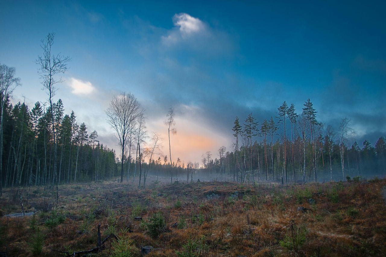 Forest in fog against sky