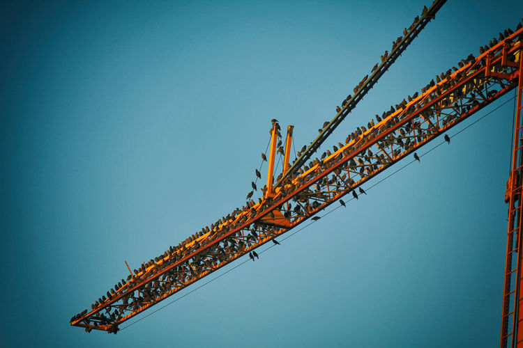 Low Angle View Of Birds Perching On Crane Against Clear Sky